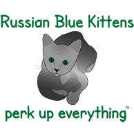 Russian Blue Kittens Perk Up Everything